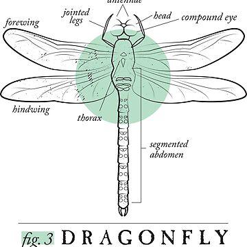 Fig. 3 Anatomy of a Dragonfly by MudAndMarrow