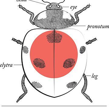 Fig. 4 Anatomy of a Ladybug by MudAndMarrow