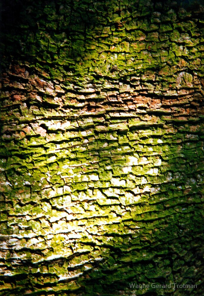 Tree Bark by Wayne Gerard Trotman