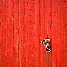 Cute Puppy by Heidi Stewart