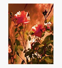 Sky Roses Photographic Print