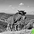 The grass is always greener on the top by John Spies