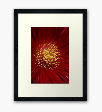 Pollen Framed Print