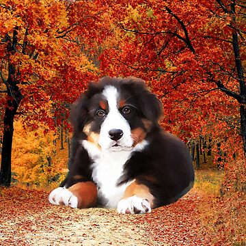 Bernese Mountain Dog sitting with Trees Autumn Fall  by aashiarsh