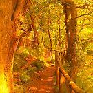 The Enchanted Wood by Heidi Stewart