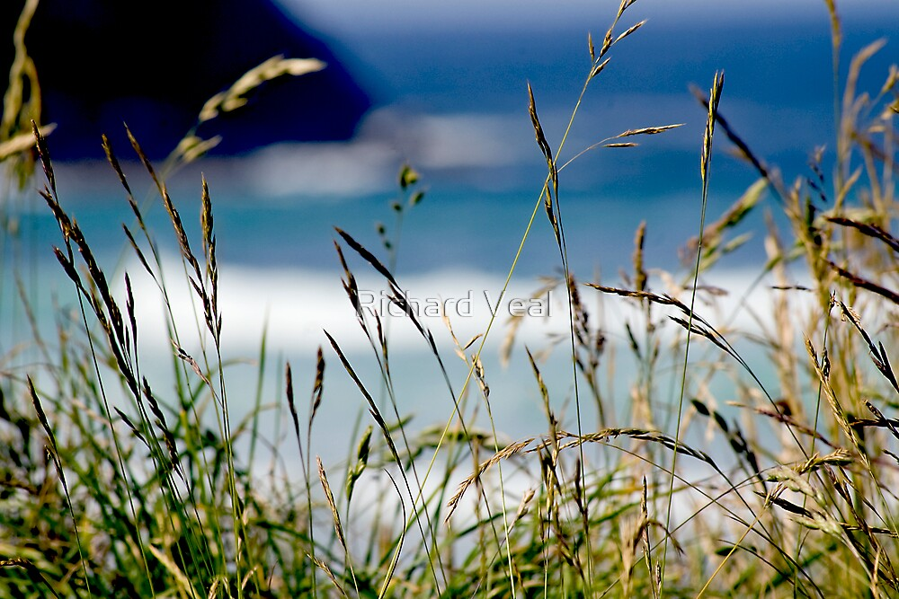 Seagrass by kcphotography