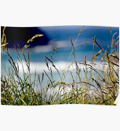 Seagrass Poster