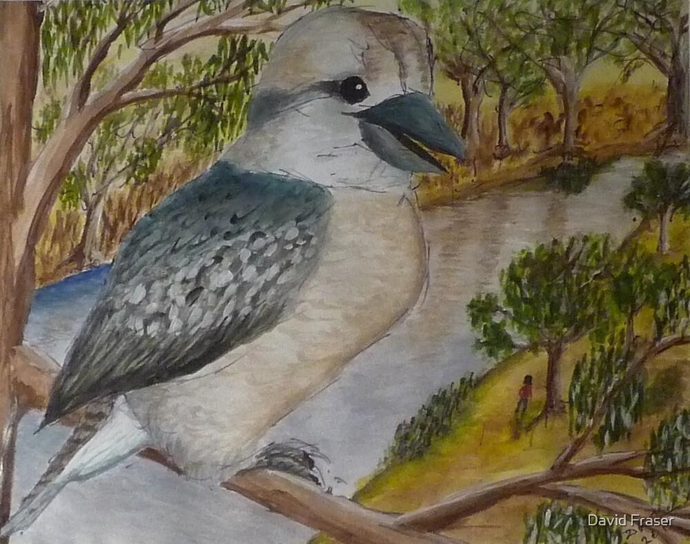 Kookaburra by David Fraser