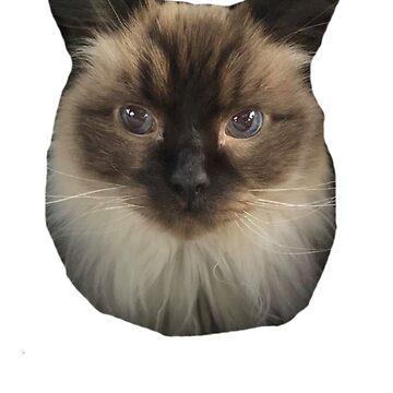 El gato de Rowan de laurajoy16