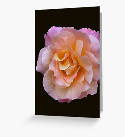 Peach and Pink Rose Greeting Card