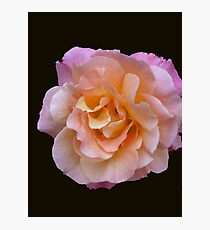 Peach and Pink Rose Photographic Print