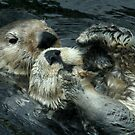 Otters Cuddling together by AnnDixon
