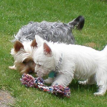Tilly & Oscar Making Friends by karenkirkham