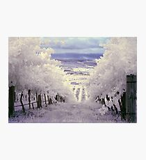 Vines Photographic Print