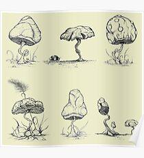 Mycology 6-Pack Poster