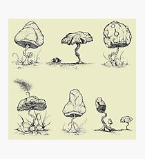 Mycology 6-Pack Photographic Print