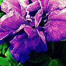 Like Velvet by MRPhotography