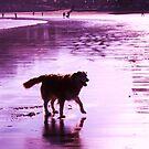 saz walking across the beach by xxnatbxx