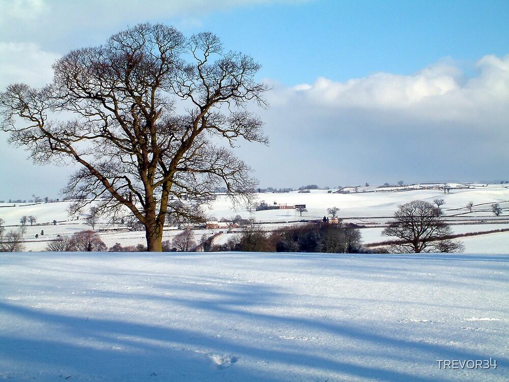 Winter Days by TREVOR34