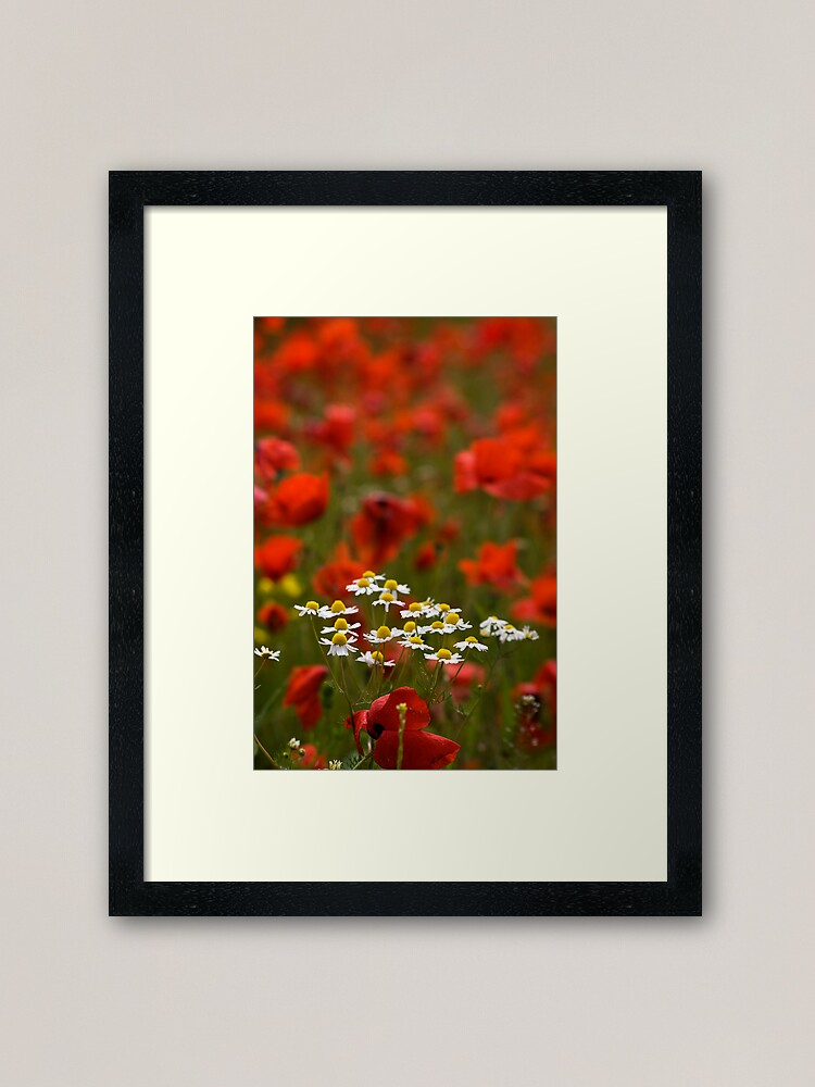 Alternate view of Poppies and Daises Framed Art Print