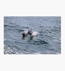 Dolphins Jumping from Water  Photographic Print