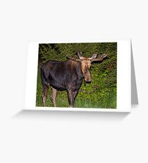 Nightwalker: Bull Moose Greeting Card