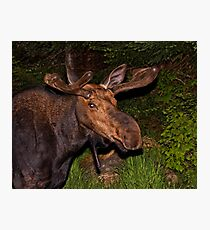 Eyes of the Night: Bull Moose Photographic Print