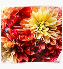 Red Frilly Flowers Poster