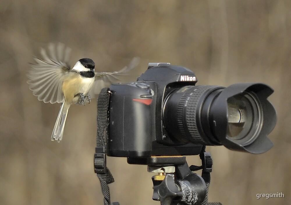 Bird Photographer by gregsmith