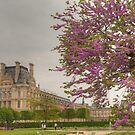 Spring Beauty In Paris by Michael Matthews