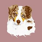 Red Merle Australian Shepherd Dog Portrait by Barbara Applegate