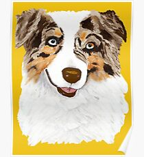 Red Merle Australian Shepherd Dog Poster