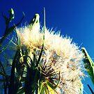 Dandelion Sky by MRPhotography