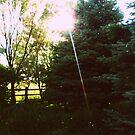 Secret Garden by MRPhotography