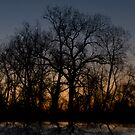 Tree Silhouette by gmanchi