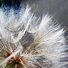 Fuzzy by MRPhotography