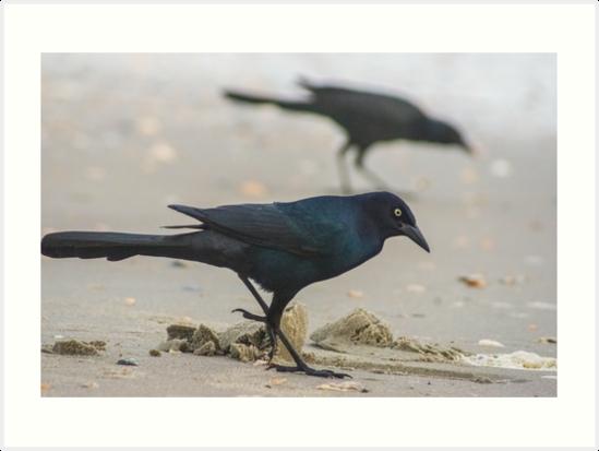 Crow Fish 2 2 by KensLensDesigns
