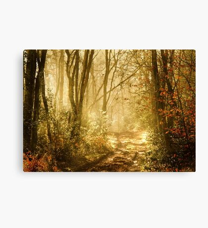 Light To My Path Canvas Print