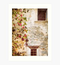 Camelia flowers and decayed house Art Print