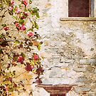 Camelia flowers and decayed house by Silvia Ganora