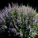 Purple Profusion by toby snelgrove  IPA