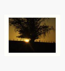100km phr Tree! Art Print