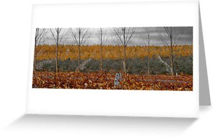 vineyard by Ben Reynolds