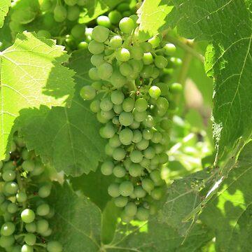 Green grapes by Filifjonka