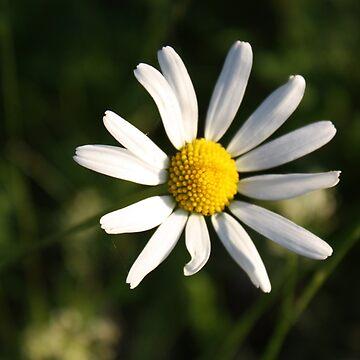 White Flower by Filifjonka