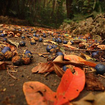 Storm berries by Filifjonka