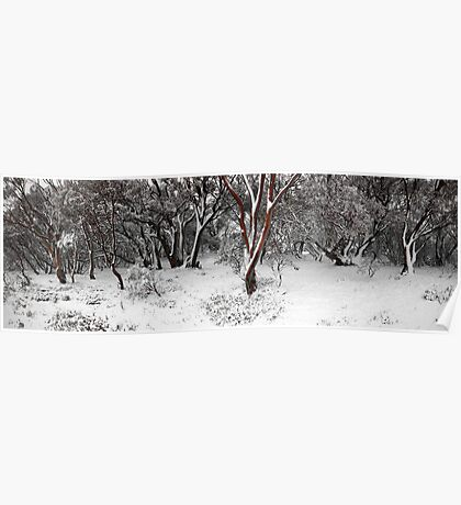 snow gums Poster