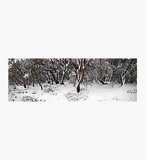 snow gums Photographic Print