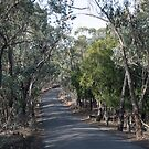 Henley Road Kangaroo Ground Victoria 20180425 2567  by Fred Mitchell