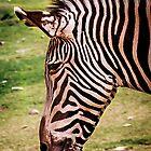 Zebra Profile by gemlenz